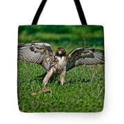Red-tailed Hawk & Gopher Snake Tote Bag