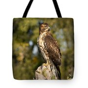 Red Tailed Hawk 1 Tote Bag