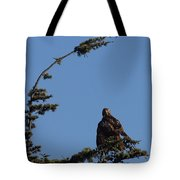 Red Tailed Hawk 2 Tote Bag by Ernie Echols