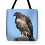 Red-tailed Hawk Monterey California  2008 Tote Bag