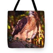 Red Tailed Hawk - 53 Tote Bag