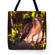 Red Tailed Hawk - 54 Tote Bag