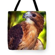 Red Tailed Hawk - 66 Tote Bag