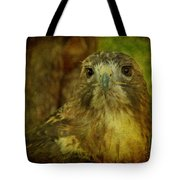Red-tailed Hawk II Tote Bag