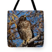 Red-tailed Hawk In A Willow Tree Tote Bag