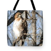 Red-tailed Hawk Looking Tote Bag