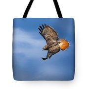 Red-tailed Hawk Soaring Square Tote Bag