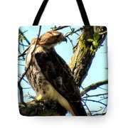 Red Tailed Interest Tote Bag