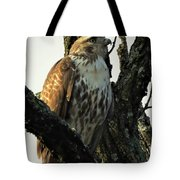 Red Tailed Morning Tote Bag