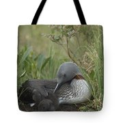 Red-throated Loon With Chick On Nest Tote Bag