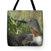 Red-throated Loon With Day Old Chicks Tote Bag by Michael Quinton
