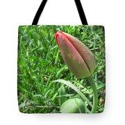 Red Tulip Bud Tote Bag
