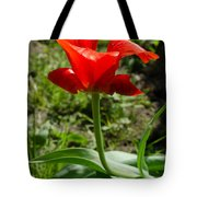 Red Tulip On The Green Background Tote Bag