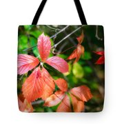 Red Viginia Creeper And Maple Leaves Tote Bag