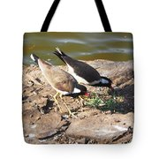 Red-wattled Lapwing Tote Bag