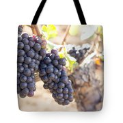 Red Wine Grapes Growing On Old Grapevine Tote Bag