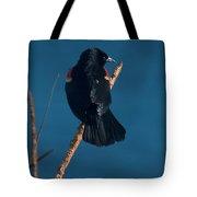 Red Winged Black Bird Tote Bag