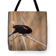 Red Winged Blackbird 1 Tote Bag by Ernie Echols