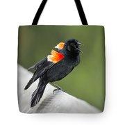 Red-winged Blackbird Display Tote Bag