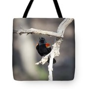 Red-winged Blackbird Tote Bag