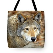 Red Wolf Portrait Tote Bag