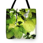 Catalpa Branch Tote Bag