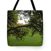 Redbud Tree In Autumn Tote Bag