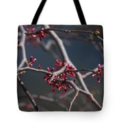 Redbuds Ready To Pop Tote Bag