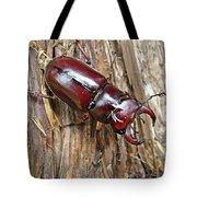 Reddish-brown Stag Beetle - Lucanus Capreolus Tote Bag