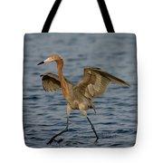 Reddish Egret Doing Fishing Dance Tote Bag