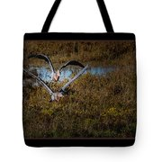 Reddish Egrets Tote Bag