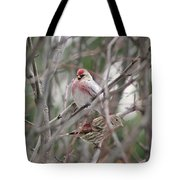 Redpoll And Pine Siskin Tote Bag