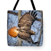 Redtail Hawk Square Tote Bag by Bill Wakeley