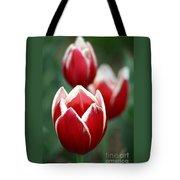 Redwhitetulips6838-1 Tote Bag