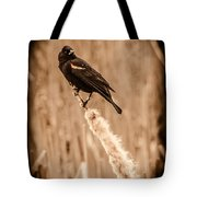 Redwing Blackbird On Cattail Tote Bag