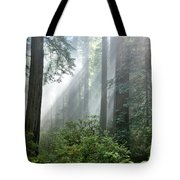 Redwood Forest With Sunbeams Tote Bag