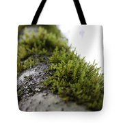 Redwood Branches Tote Bag
