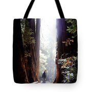 Redwood Path Tote Bag
