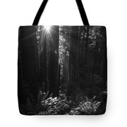 Redwood Sunburst Monochrome Tote Bag