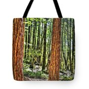 Redwoods 2 Big Basin Tote Bag