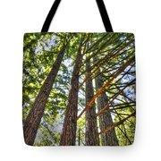 Redwoods 3 Big Basin Tote Bag
