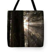 Redwoods First Light Tote Bag