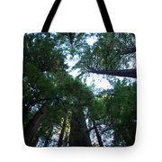 Redwoods II Tote Bag