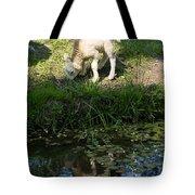 Reflected Cute Little Lamb Tote Bag