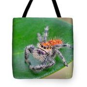 Regal Jumping Spider Tote Bag
