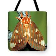 Regal Moth Tote Bag