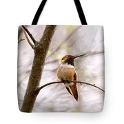 Regal Rufous Hummingbird Sitting Tote Bag