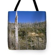 Regrowth Since Eruption Mt Saint Helens Tote Bag