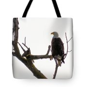 Relaxed Eagle Tote Bag