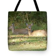 Relaxing In The Sun And Shade Tote Bag